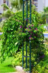 Garten mit Pergola und Bouganvillea
