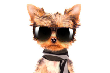 dog wearing a shades and scarf