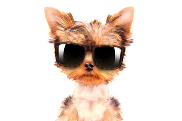 dog wearing a shades