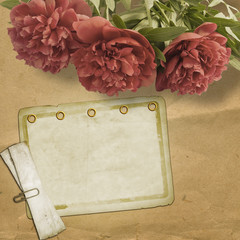 Vintage old postcard for congratulation with pink peonies