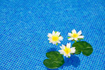 Swimming Pool - blauer Swimmingpool mit drei Seerosen
