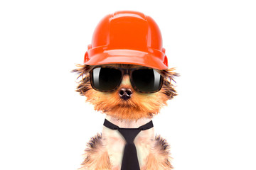 dog  dressed as builder