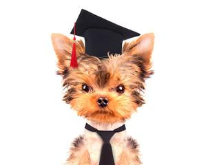 graduated dog
