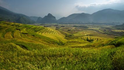 terraced rice field in sunshine, Yen Bai, Vietnam ,go between th