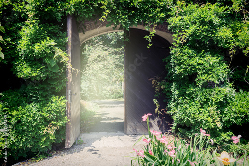 Old wooden gate with lianas - 71136139