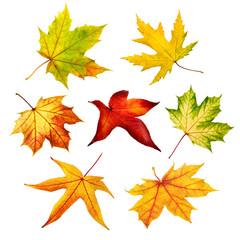 Bunte freigestellte Herbstblätter im Set
