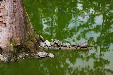 water turtles