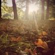 Herbstlicht im Park
