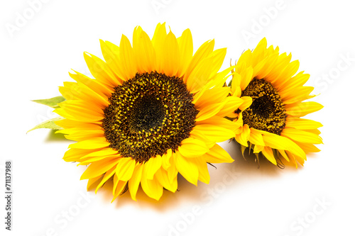 Fotobehang Zonnebloemen Sunflowers on the white background
