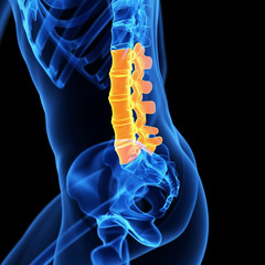 medical illustration of the lumbar spine