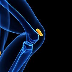 medical illustration of the knee cap