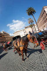 carriage pulled by a horse, waiting for tourists to Piazza Venez