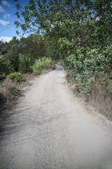 Old off road track through dense foliage on Mediteranean island