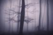 tree in dark forest halloween mood