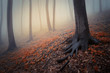 dreamy colorful forest with fog