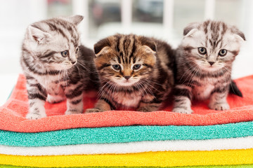 Three curious kittens.