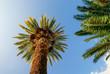 canvas print picture - Palme su sfondo azzurro, cielo
