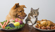 Dog and cat choosing between veggies and meat - 71145309