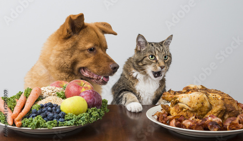 Fotobehang Kip Dog and cat choosing between veggies and meat