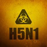 H5N1 Avian Flu - Bird Flu. Biohazard yellow alert sign poster