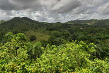 Tropical Forest, Dominican Republic