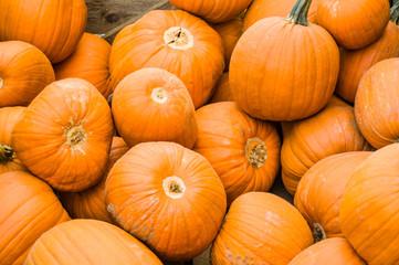 Orange pumpkins on display