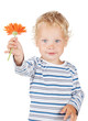 Obrazy na płótnie, fototapety, zdjęcia, fotoobrazy drukowane : White curly hair and blue eyes baby with flower