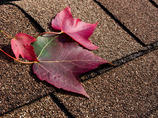 Red maple leaves on asphalt shingles