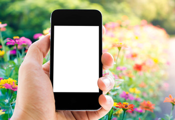 hand holding phone with flower background