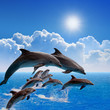 Jumping dolphins - 71156911