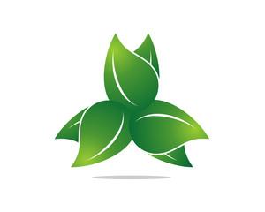 Leaf Life 3