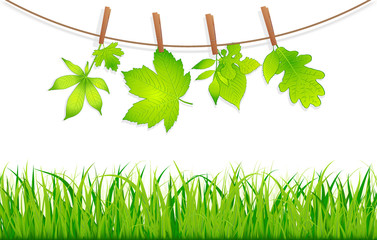 green leaves with clothespins