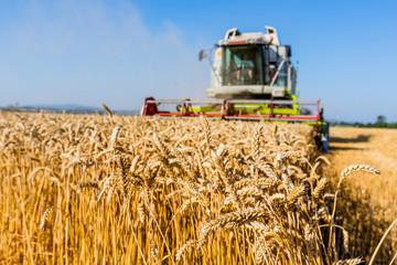 Getreidefeld mit Weizen bei der Ernte