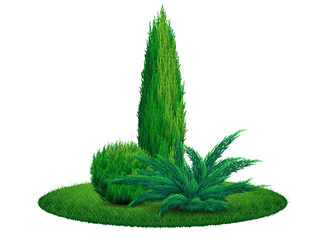 Thuja tree juniper bush on the grass