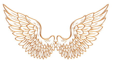 Golden eagle wing isolated on white background.