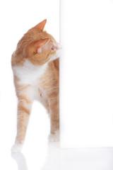 Katze neben weißer Wand