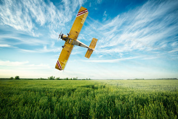 airplane flies over a wheat field spraying fungicide and pestici