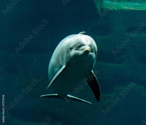 Deurstickers Dolfijn Bottlenose dolphin