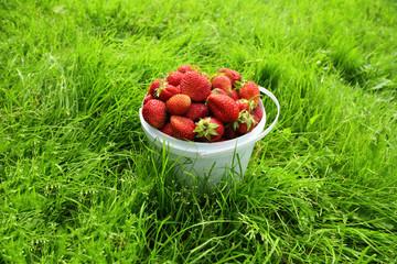 Ripe strawberry in bucket