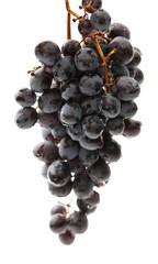 Twig of black grape