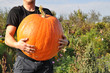 Man with big pumpkin