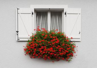 Fassade mit Holzfenster Klappladen und üppiger Blumenpracht