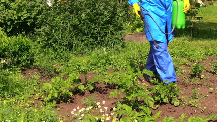 Farmer in protective workwear spray pesticide on potato plants