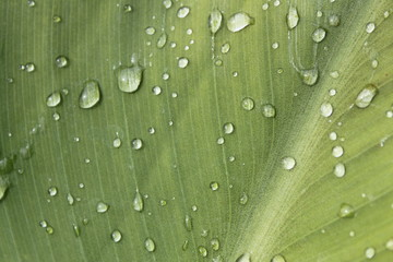 Regentropfen auf Blatt