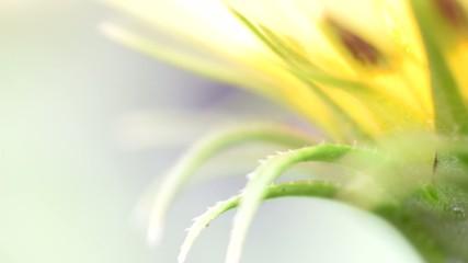 Flower petals macro view