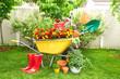 Obrazy na płótnie, fototapety, zdjęcia, fotoobrazy drukowane : Garden tools