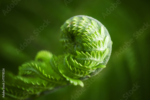 Foto op Plexiglas Lente Macro photo of young fern sprout with selective focus