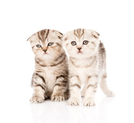 two taby kittens in front. isolated on white background