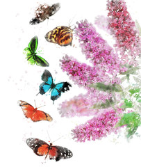Watercolor Image Of Butterfly Bush
