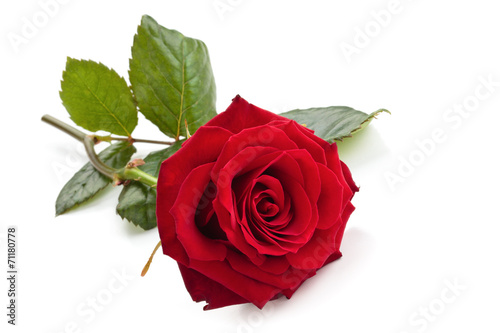 Deurstickers Bloemen Red rose.